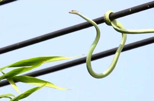 Article : «Attention aux reptiles !» : quand les Béninois tournent en dérision les coupures électriques